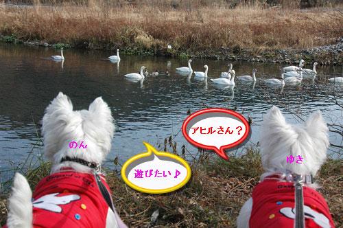 DSC_0016_20110104150217.jpg