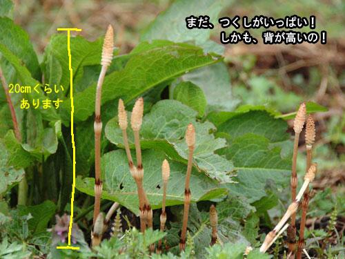 DSC_0016_20110505204632.jpg