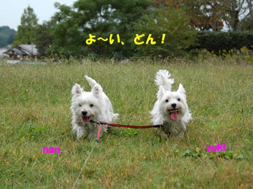 DSC_0021_20101027215708.jpg