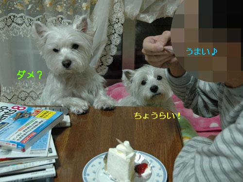 DSC_0026_20101226180637.jpg