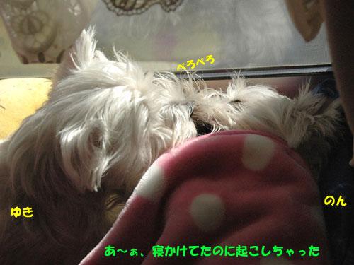 DSC_0028_20101201192929.jpg