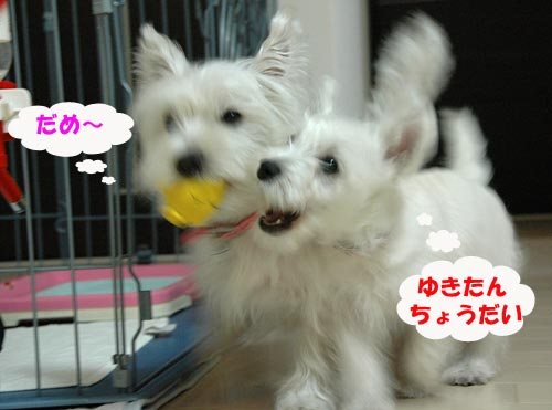 DSC_0030_20100228171152.jpg