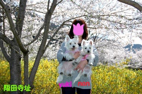 DSC_0030_20100404205717.jpg