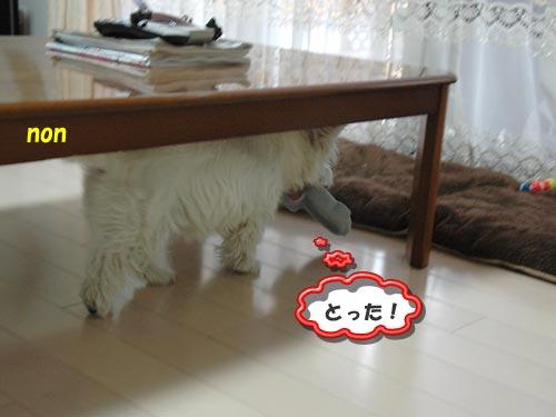DSC_0033_20100630214353.jpg