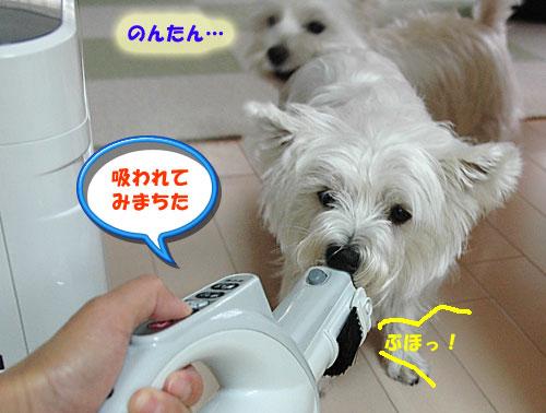 DSC_0033_20101016152315.jpg