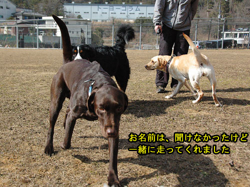 DSC_0033_20110210194432.jpg