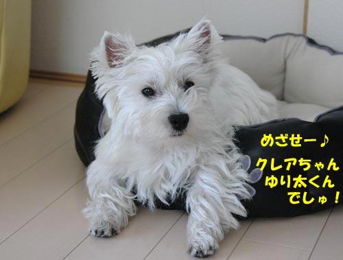 DSC_0034_20100812081610.jpg