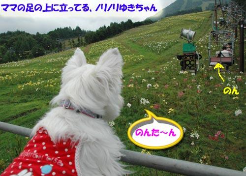 DSC_0035-s.jpg