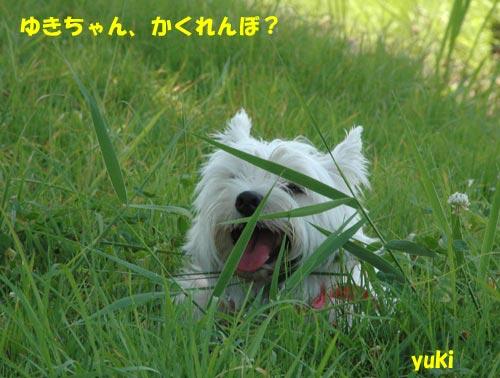 DSC_0035_20100725222156.jpg