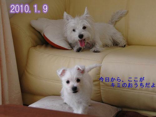 DSC_0036_20110109232733.jpg