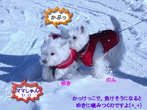 DSC_0038_20110104150624.jpg