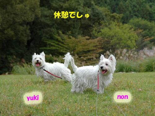 DSC_0040_20101027215816.jpg