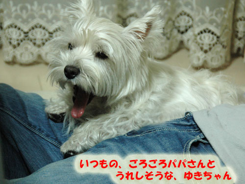 DSC_0042_20101018192052.jpg