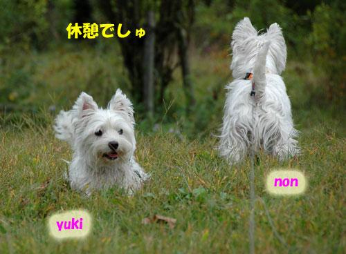 DSC_0042_20101027215816.jpg
