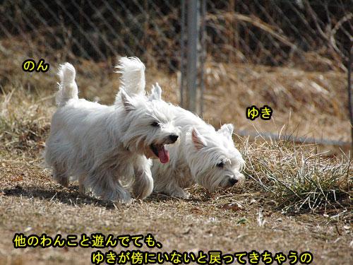 DSC_0042_20110210194431.jpg