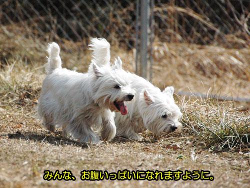 DSC_0042_20110316222824.jpg