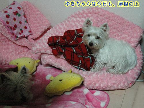 DSC_0044_20110122181022.jpg