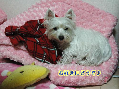 DSC_0048_20110122181022.jpg