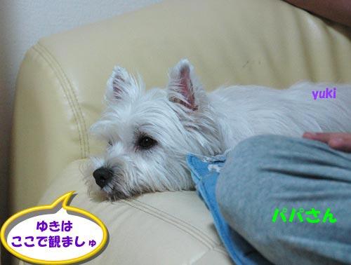 DSC_0049_20100807180841.jpg
