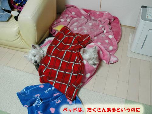 DSC_0049_20101209144838.jpg
