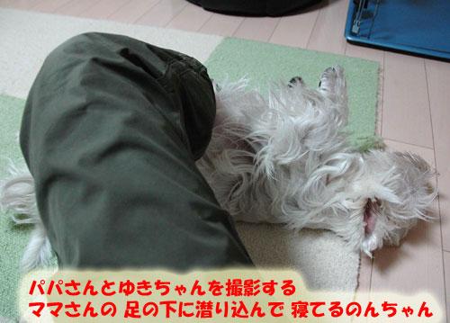 DSC_0050_20101018192051.jpg