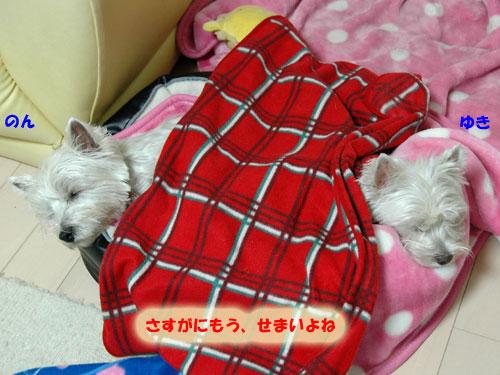 DSC_0050_20101209144838.jpg