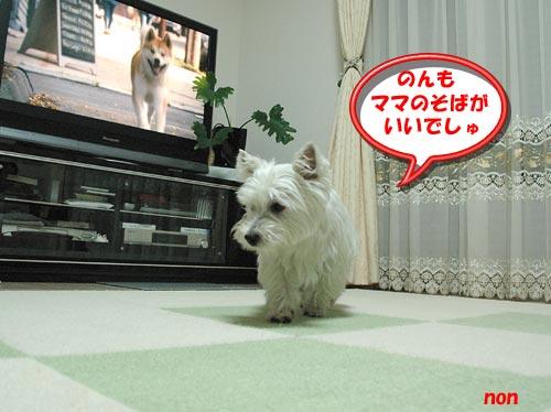 DSC_0051_20100807180829.jpg