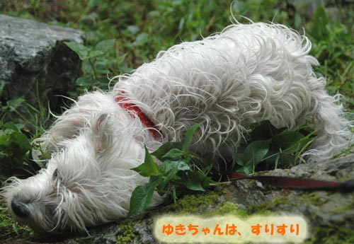 DSC_0054_20100830164614.jpg
