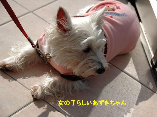 DSC_0060_20101230154200.jpg