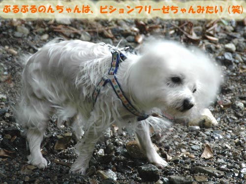DSC_0061_20100830164742.jpg