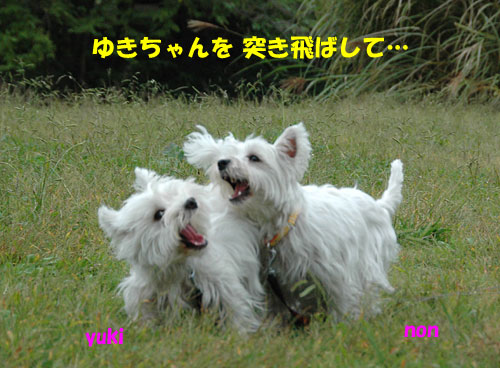 DSC_0061_20101027215708.jpg