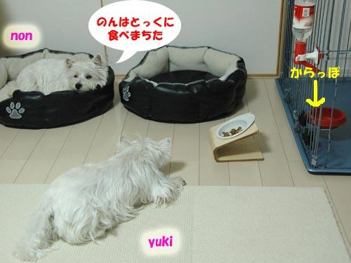 DSC_0063_20100812083814.jpg