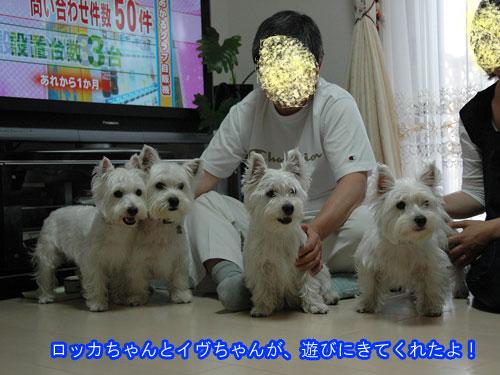 DSC_0064_20110207225848.jpg