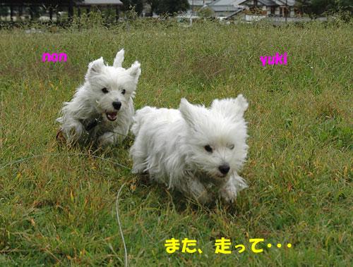 DSC_0066_20101027215707.jpg