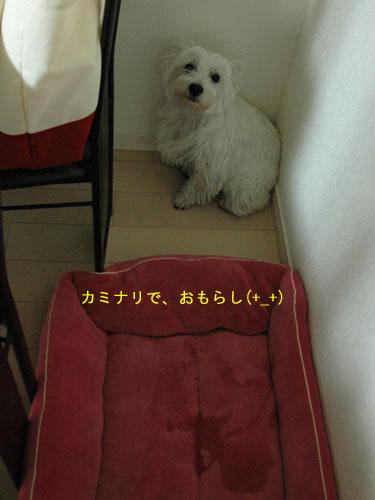 DSC_0066_20110109233150.jpg