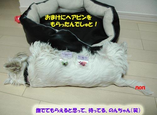 DSC_0067_20100526215204.jpg
