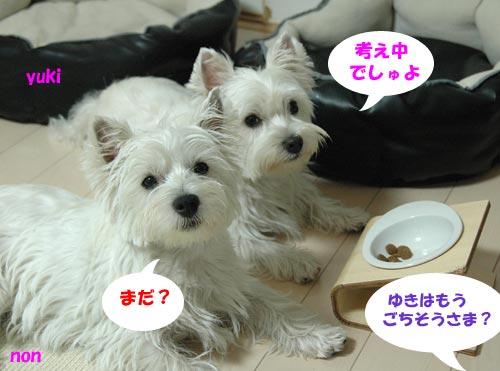 DSC_0068_20100812083813.jpg