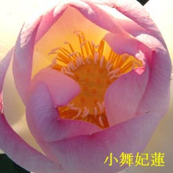 DSC_0069_20100718190828.jpg