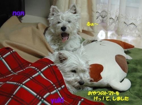 DSC_0072_20100601193804.jpg