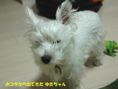 DSC_0078_20100309140610.jpg