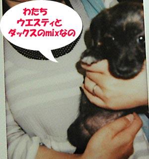 DSC_0079_20100601193804.jpg