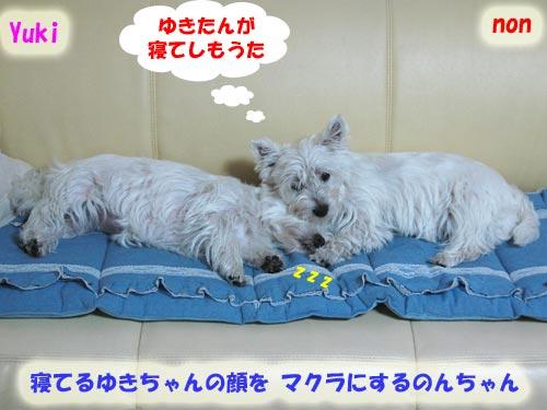 DSC_0079_20100628194030.jpg