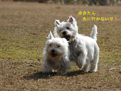 DSC_0082_20110210194703.jpg