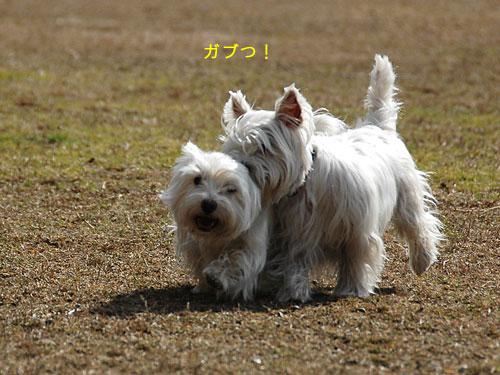 DSC_0083_20110210194703.jpg