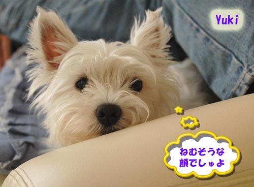 DSC_0090_20100627194746.jpg