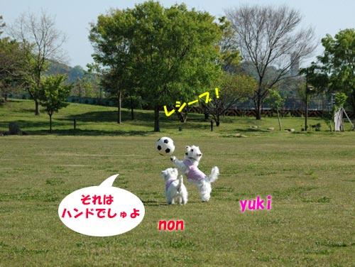 DSC_0093_20100501194343.jpg