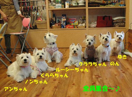 DSC_0096_20101123000607.jpg