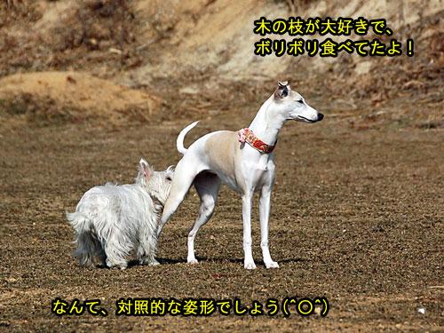DSC_0097_20110210194144.jpg
