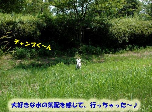 DSC_0098_20100726212248.jpg