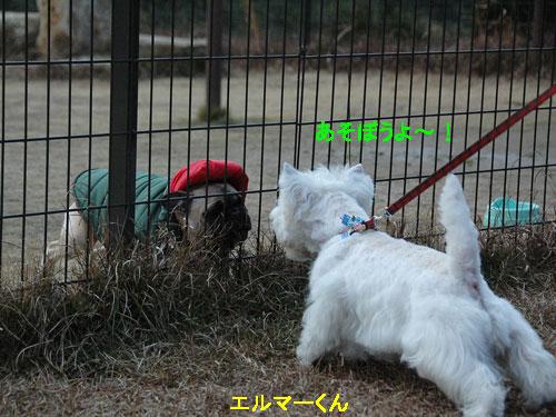 DSC_0103_20101230154519.jpg